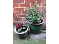 2 Pots with Plants