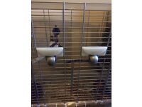 URGENT 5 finches for sale