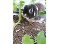 Found a Brownish small rabbit Cardiff