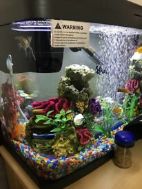 Tropical Fish for sale with tank