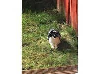 Lovely friendly rabbit