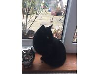 Sooty needs a home