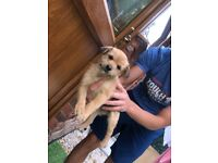 3 beautiful puppies for sale