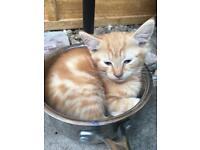 Kittens ready for loving new homes £100