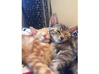 2 Kittens need a loving home