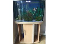 3ft bow front fish tank inc accesories