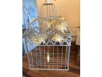 Bird cage with light