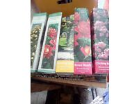 5 x rose plants ready to plant out