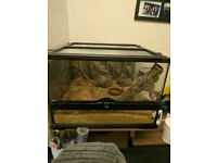 Vivarium with stand, accessories and leopard gecko