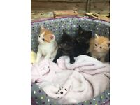 Kittens ready for rehoming