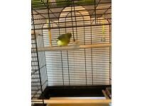 BARGAIN. CANARY BIRD CAGE COMPLETE SET UP