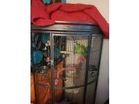 Lovely Amazon Parrot