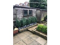 Buyer need to remove, the larger shed is £100 & the smaller £ 50