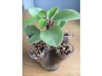 Indoor plant in unique glass pot