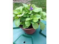 Garden Plants & Display Pots