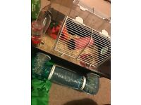 Selling brand new hamster