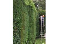 Experienced & Reliable Handyman & Gardener