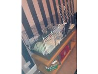2 Female Bunny Rabbits for sale with Cage