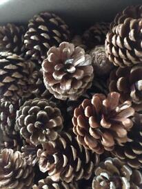 Devon fir cones various sizes for crafts. Florist decoration