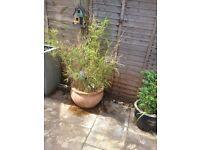 Garden pot with bamboo