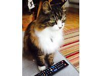 Missing Cat - IP4 area Ipswich