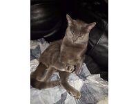 My beautiful Grey Kitty