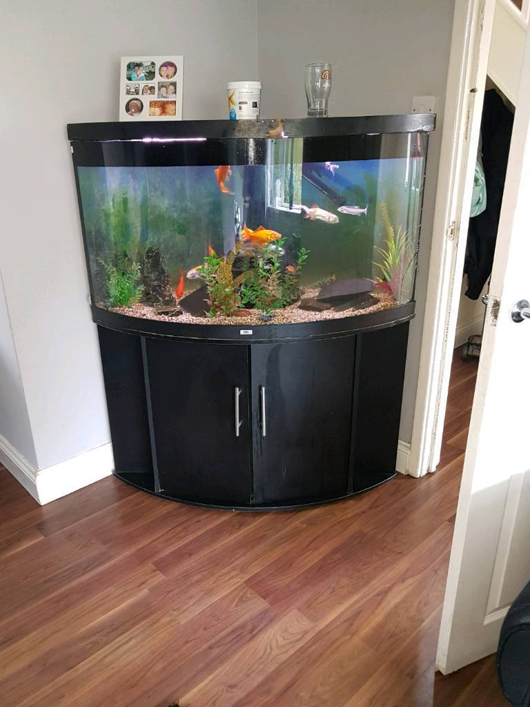 Juwel corner fish tank in north shields tyne and wear for Corner fish tank for sale