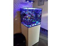 Evolution aqua aquarium