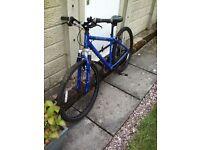 Apollo XC 26 ladies bike