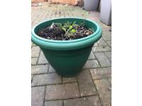 Plastic pot with compost