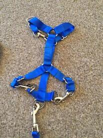 Large parrot harness