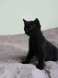 Kitten with 'devil' ears :)