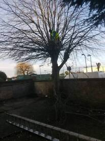 TREE SURGERY TREE CUTTING AND REMOVAL GARDEN CLEARANCES