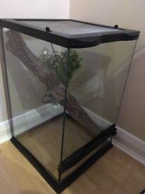 Crested gecko terrarium