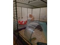 Lovely Syrian hamster with cage etc