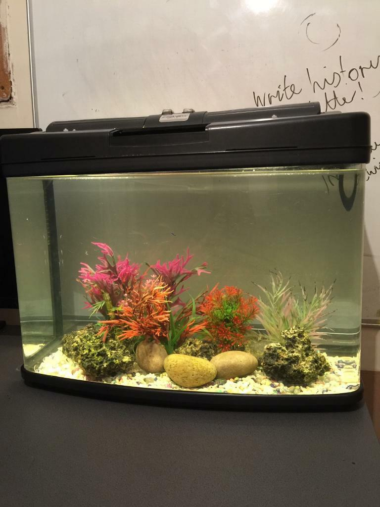 Freshwater aquarium fish no heater - Fish Tabk With Ornaments And Gravel No Heater Or Filter