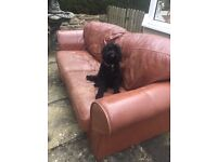 3 seater brown leather Italian settee. Dog not included. Pre-loved.