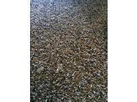 Immaculate chocolate brown rug