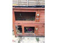 2 rabbits for sale plus hutches