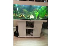 All set fish tank include 12 fish