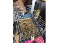 Indoor guinea pig cage with water bottle