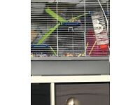 2 female gerbils and cage