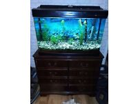 Fish tank on a stand , great filter, maintainance equipment and other accessories