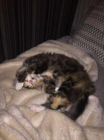 8month old female kitten