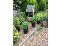 Wishing well planters