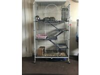 6 male degu and large cage