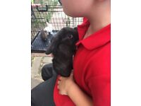 Beautiful baby bunnies looking for their forever home