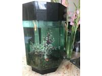 60L Coldwater Fishtank with 4 Goldfish