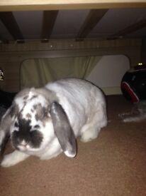 2 beautiful girl rabbits