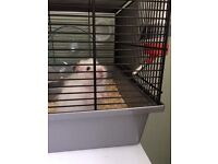 Hamster cage and equipment free to a good loving home